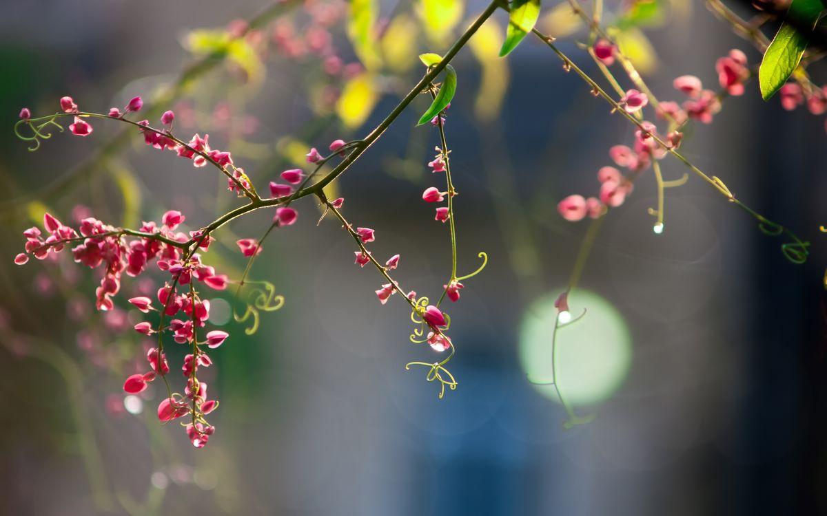 Обои цветок, цветы, листья, макро, природа, лепестки, розовый картинки на телефон