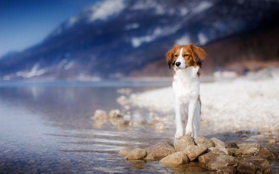 Photo free nature, water, dog