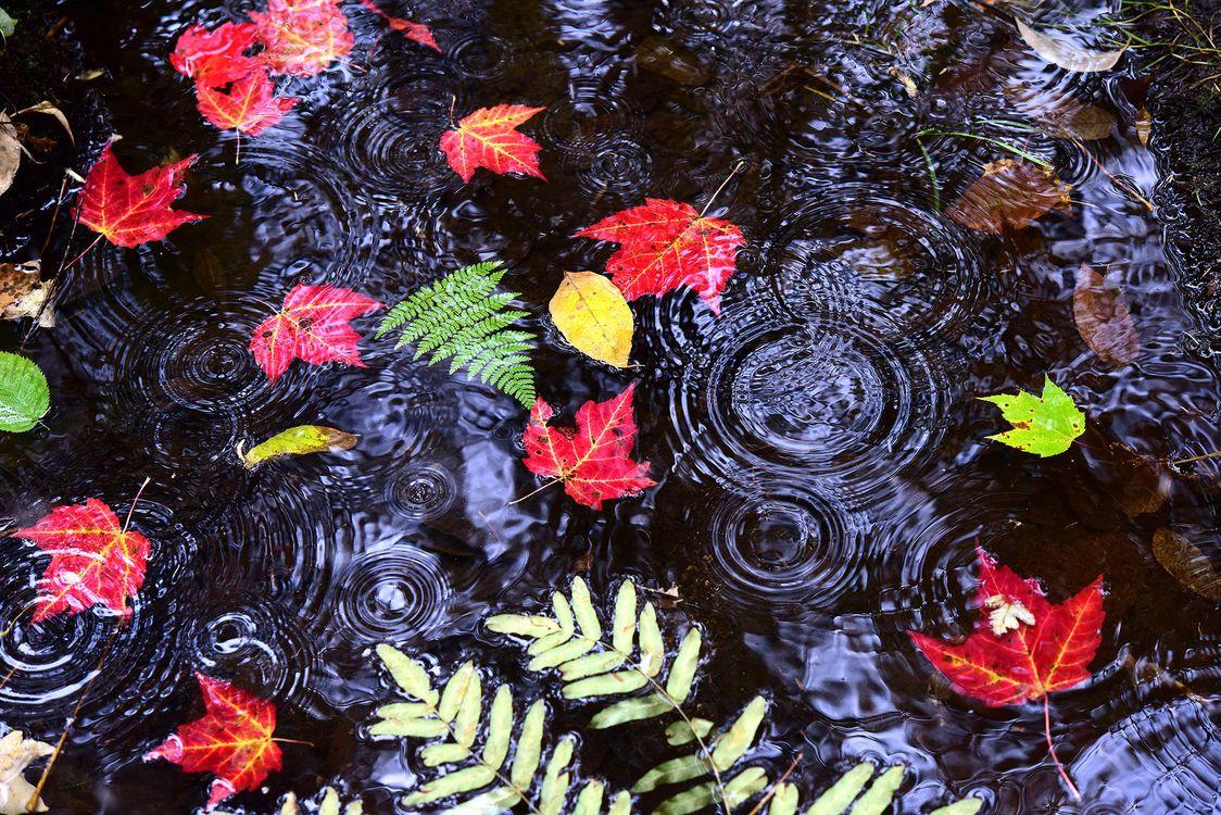 Фото бесплатно осень, водоём, вода, дождь, капли, листья, природа, природа - скачать на рабочий стол