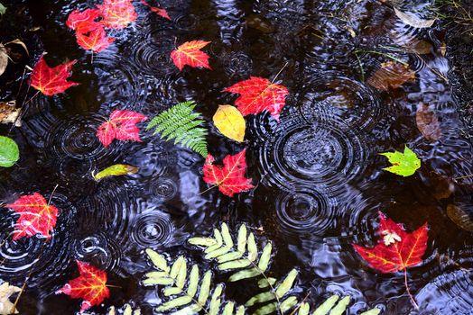 Бесплатные фото осень,водоём,вода,дождь,капли,листья,природа