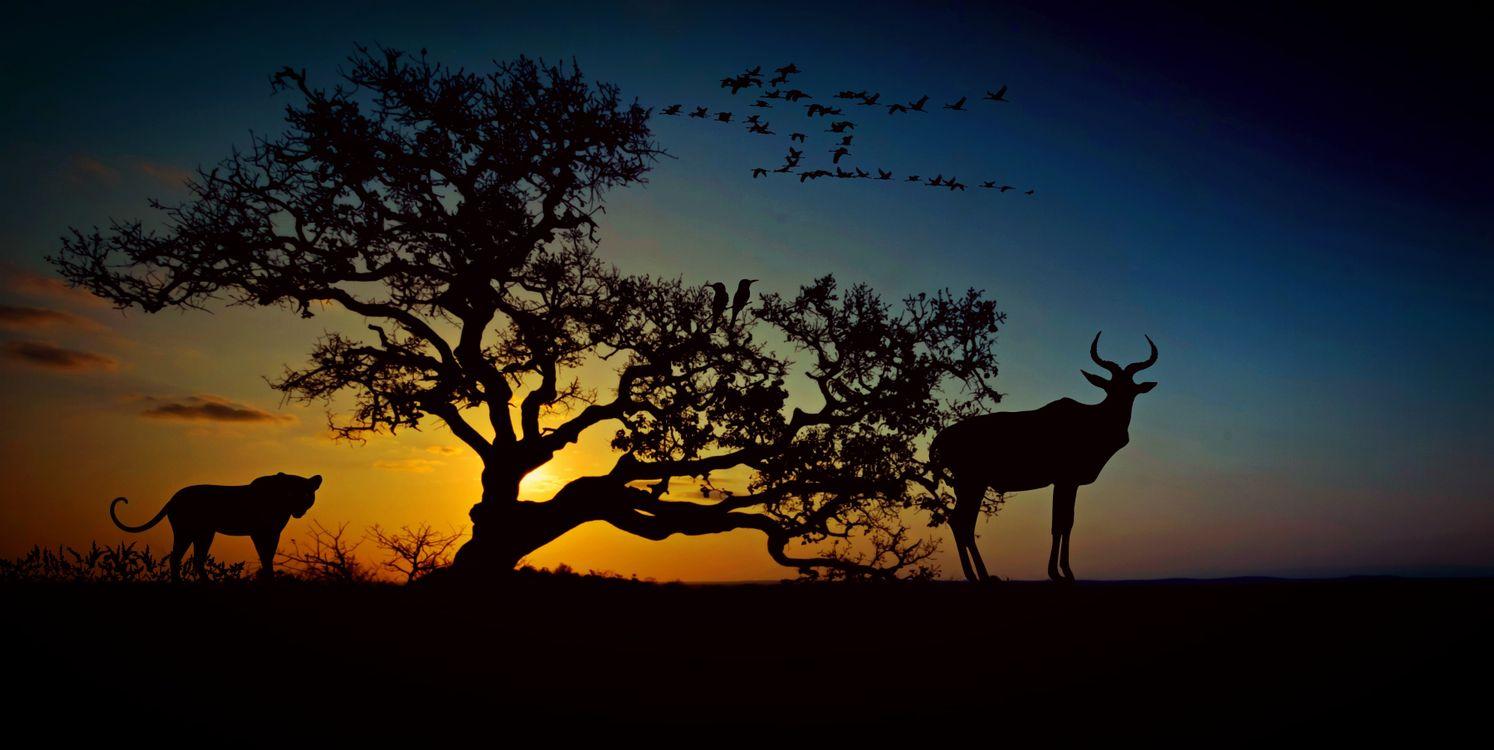 Фото бесплатно африка, животный мир, пустыня, саванна, природа, леопард, дерево, степь, животные, сафари, национальный парк, небо, пейзаж, вечернее небо, ожидание, рендеринг