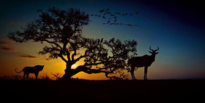 Фото бесплатно африка, животный мир, пустыня, саванна, природа, леопард, дерево, степь, животные, сафари, национальный парк, небо