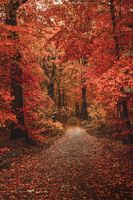 Photo free forest, colorful leaves, fall