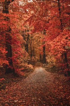 Photo free forest, colorful leaves, autumn