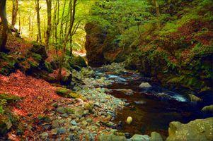 Фото бесплатно магическая река, лес, камни
