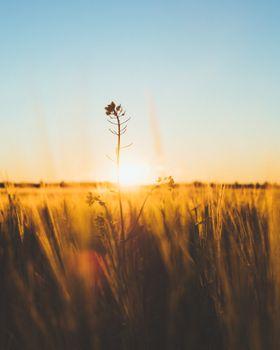 Фото бесплатно природа, поле, растение