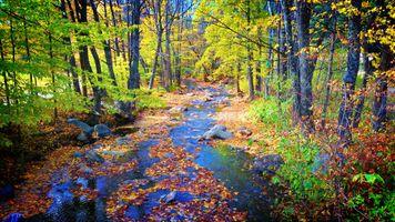 Осенний ручей усыпанный листьями