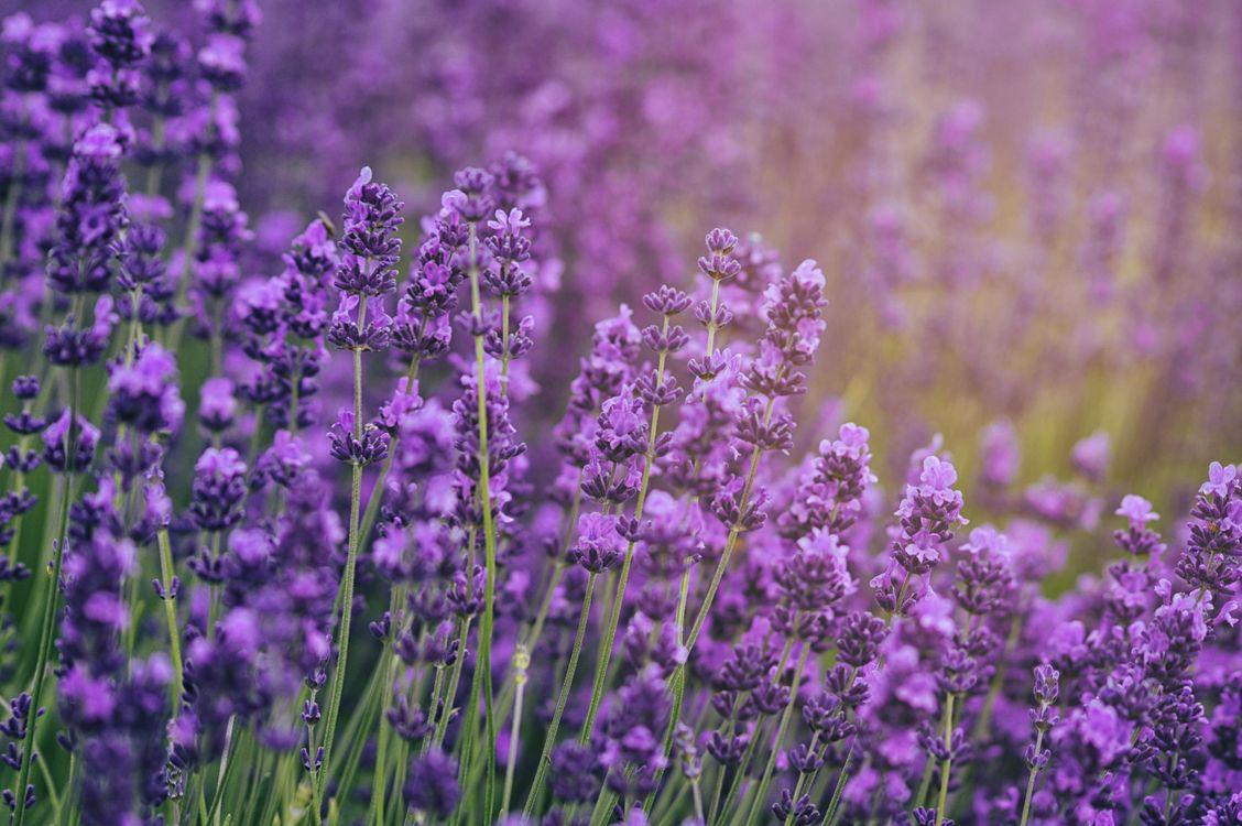 Синие цветы · бесплатная заставка