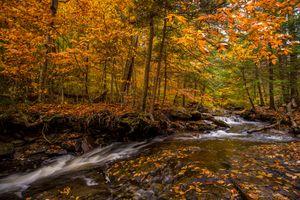 Заставки Ricketts Glen State Park in Pennsylvania, Государственный парк Рикеттс-Глен, штат Пенсильвания