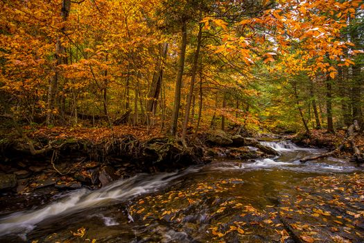 Photo free Ricketts Glen State Park in Pennsylvania, State Park Ricketts Glen, Pennsylvania