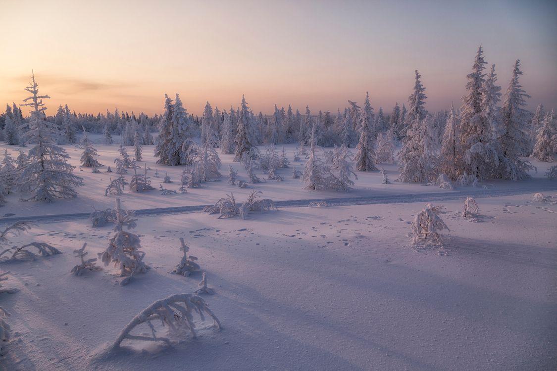 Пейзаж лесотундры · бесплатное фото