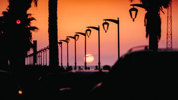 Photo free sunset, palm tree, tropical