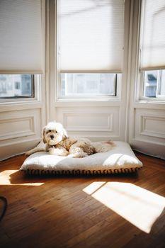 Фото бесплатно собака, домашнее животное, окно