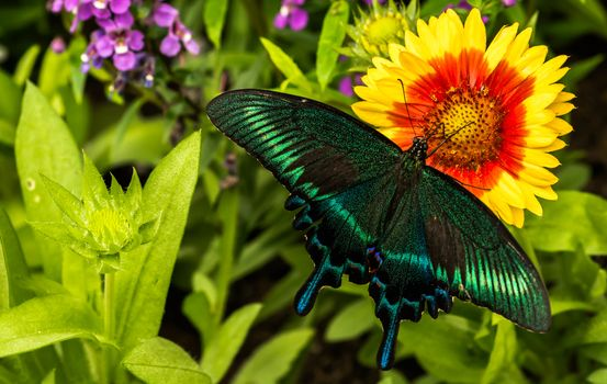 Photo free flower, nature, butterfly