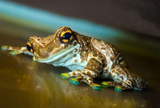 Фото бесплатно лягушка, макро, природа