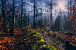 Фото бесплатно солнце, осень, деревья