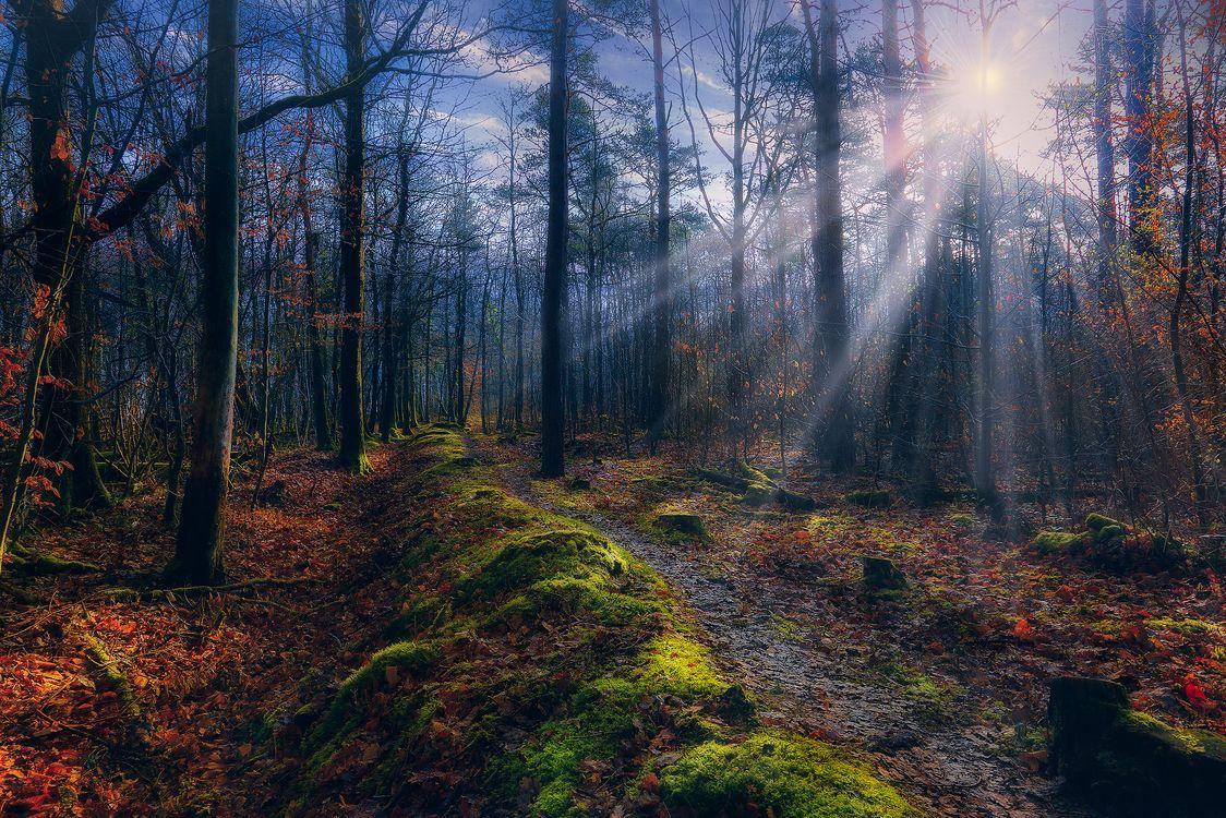 Фото бесплатно солнце, осень, деревья - на рабочий стол