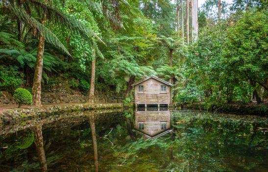 Бесплатные фото Штат Виктория,Австралия,лес,деревья,водоём,хижина,домик,пейзаж