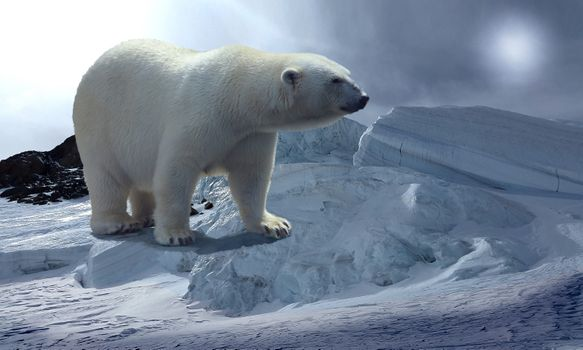 Бесплатные фото Белый медведь,полярный медведь,северный медведь,хищник,животное,север