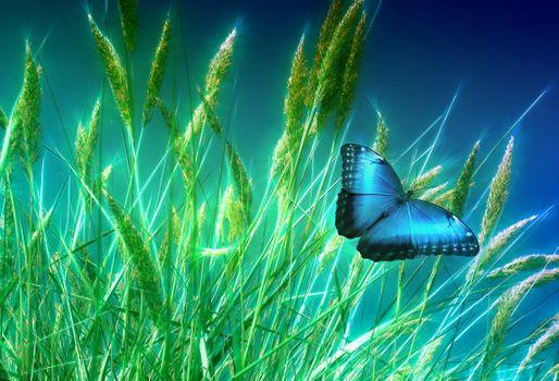 Фото бесплатно трава, бабочка, растения