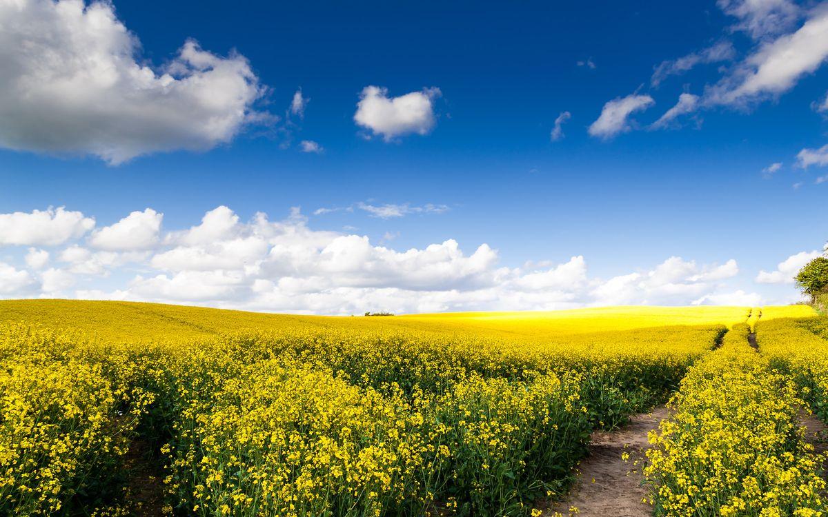 Фото бесплатно облака, поля, пейзажи - на рабочий стол