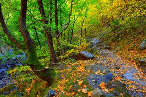 Бесплатные фото магическая река,лес,камни,деревья,осень,природа,пейзаж