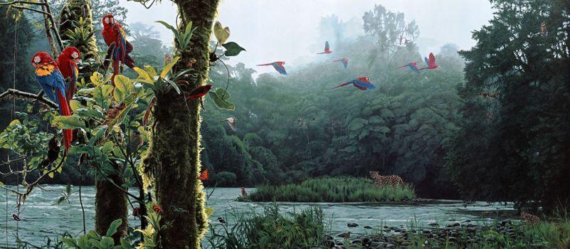 Заставки птицы, цветы, фантазия