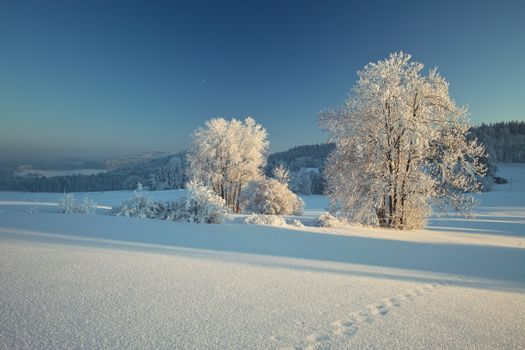 Бесплатные фото Линдберг,Байеришер-Вальд,Бавария,Германия,зима,снег,сугробы,деревья,природа,пейзаж