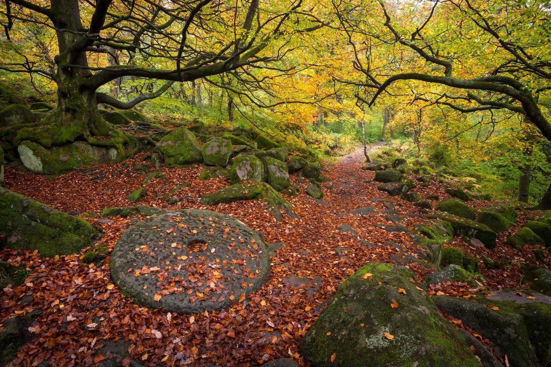 Осенний лес · бесплатная заставка