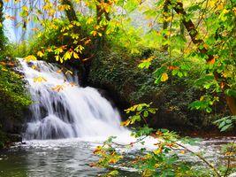 Фото бесплатно осень, водопад, лес
