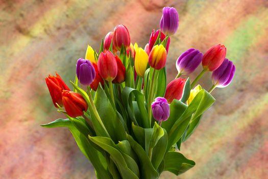 Бесплатные фото тюльпаны,цветы,букет,флора