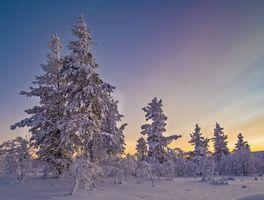 Фото бесплатно пейзаж, деревья, сугробы