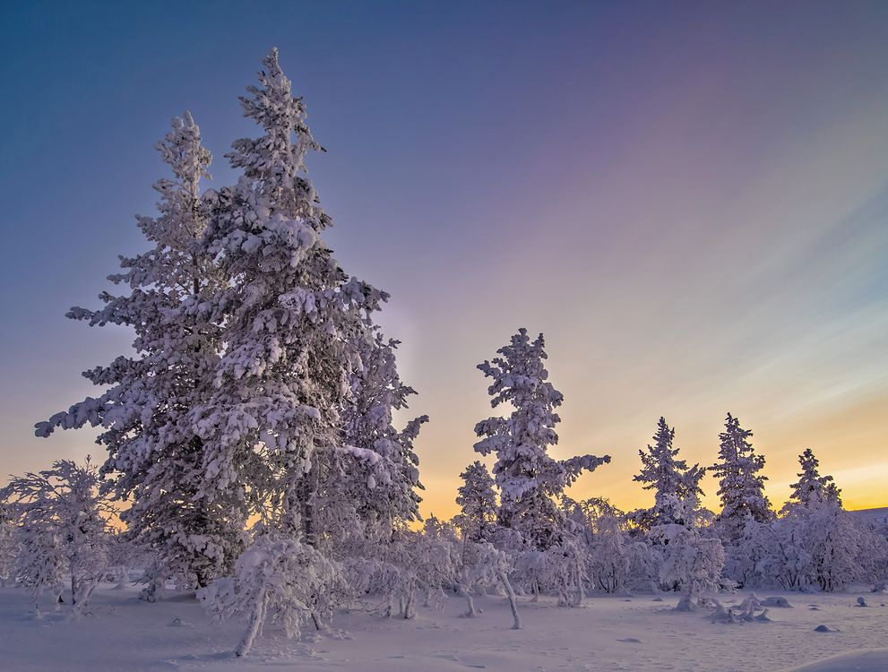 Фото бесплатно пейзаж, деревья, сугробы - на рабочий стол