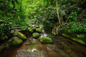 Заставки лес,деревья,камни,ручей,речка,кустарник,мох