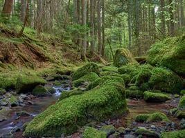 Бесплатные фото лес,деревья,речка,ручей,водопад,камни,мох