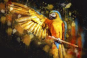 Попугай Ара