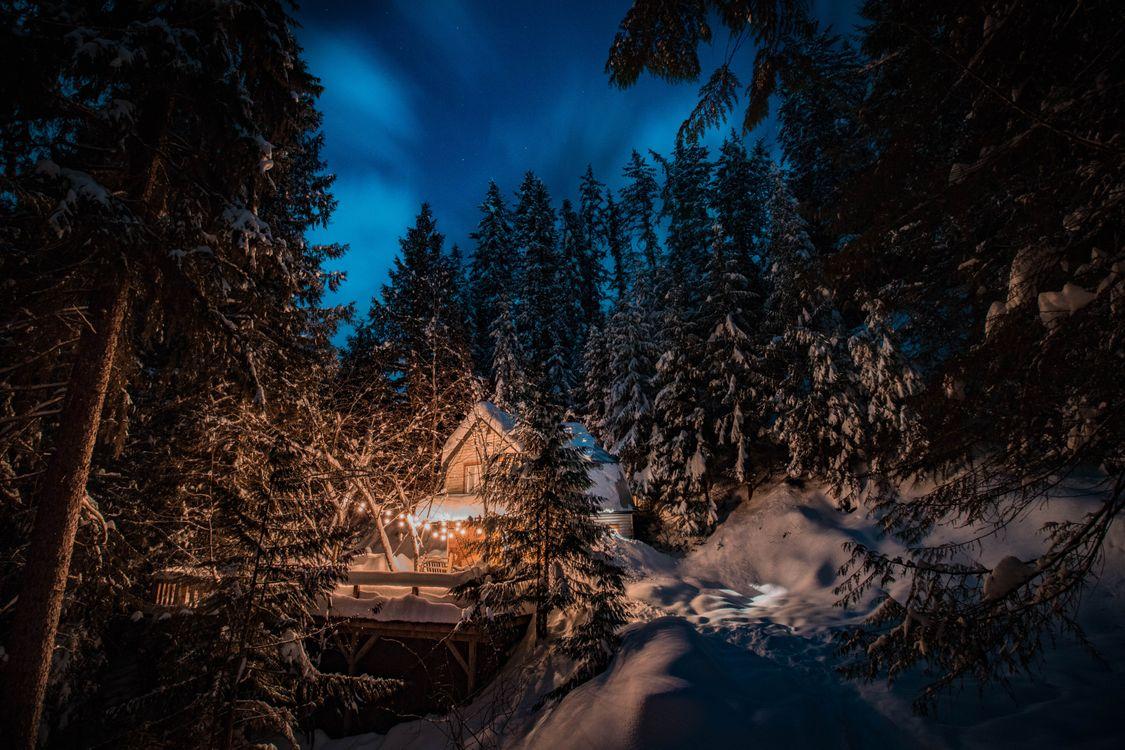 лагера курорты зима лес картинки ночь которые