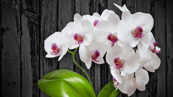 Photo free flowers, pot, white