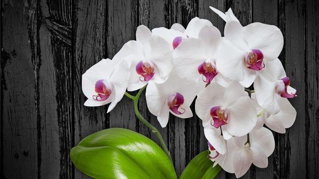 Фото бесплатно цветы, вазон, белые