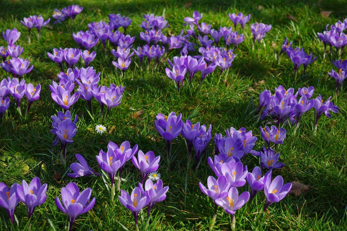 Фото бесплатно цветок, природа, цветение - на рабочий стол