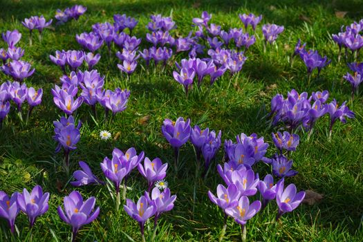 Фото бесплатно цветок, природа, цветение