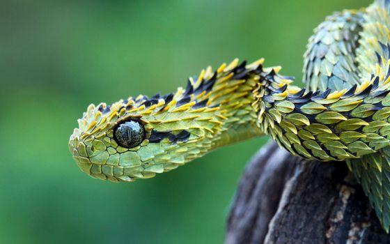 Фото бесплатно маленькая зеленая змея, дерево, рептилии