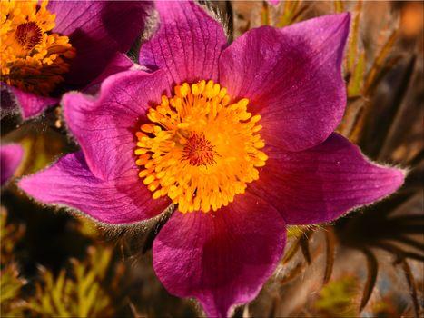 Фото бесплатно Макросъемка, цветок, флора