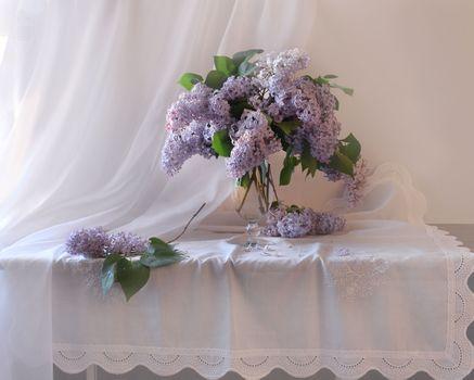 Photo free still life, lilac, photo