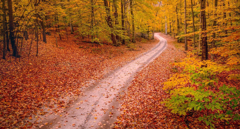 Осенняя лесная дорога в лесу · бесплатная заставка
