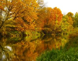 Бесплатные фото осень,река,деревья,листопад,вода
