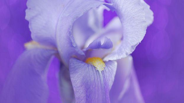 Фото бесплатно цветок, бутон, ирис