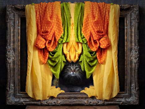Photo free cat, frame, view