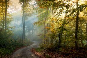 Бесплатные фото осень,парк,лес,дорога,деревья,туман,солнечные лучи