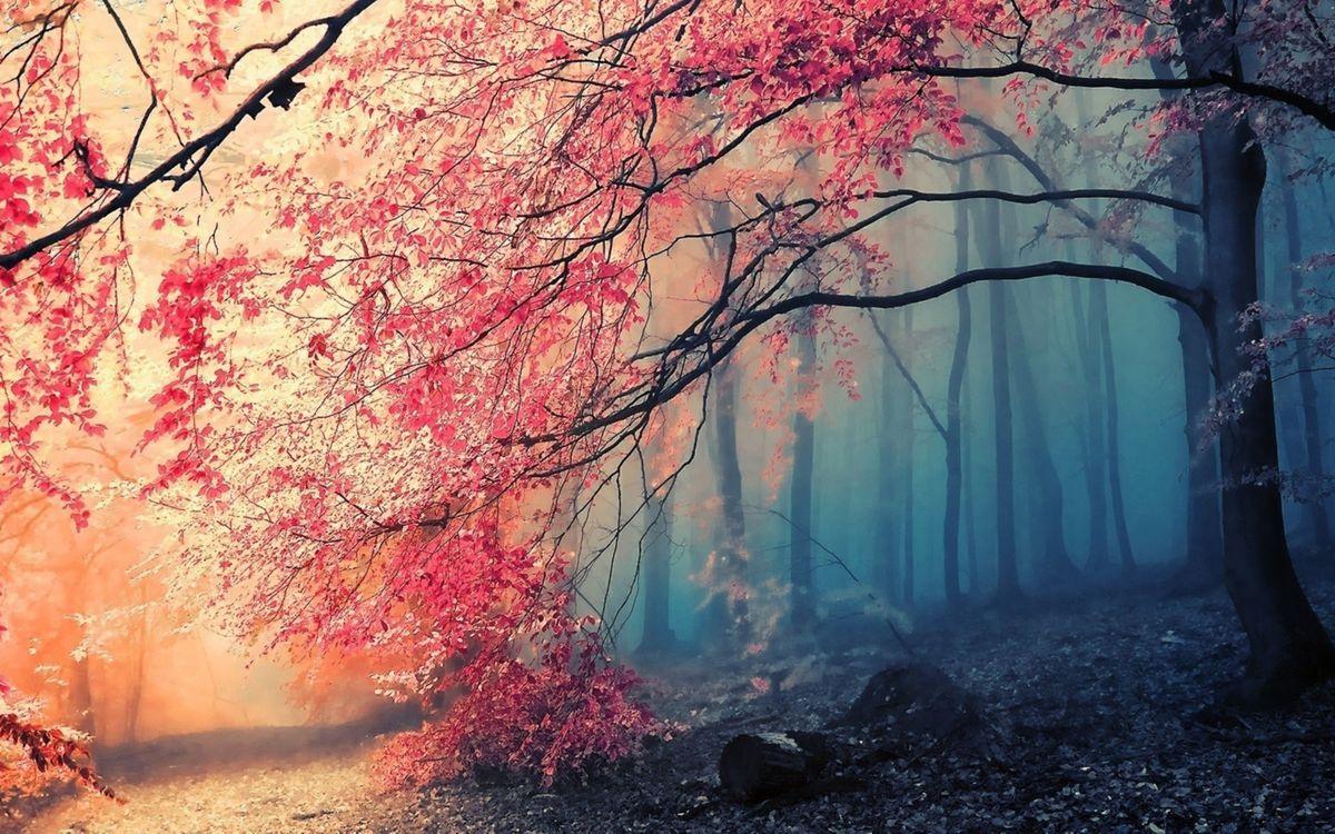 Розовый лес · бесплатное фото